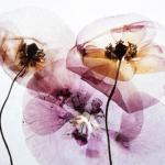 Fragrâncias Zara: Radiant Woods, Deep Vanilla, Sunrise Rose