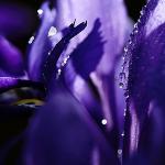 Saindo da Sua Zona de Conforto – Íris, Violeta e outros Cheiros Azuis