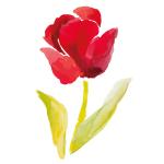 Cor e Cheiro, Parte III: Tulipa