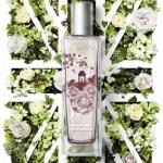 English Dawn White Gardenia