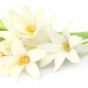 La Perla Private Collection: Lotus Shadow, Contemporary Tuberose e White Iris