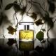Coleção de perfumes de Ann Gerard