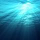 Linha da Frente: Aquáticos Marinhos (2016)