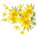 Cor e Cheiro, Parte I: Mimosa