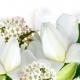 Robert Piguet Gardenia de Robert Piguet